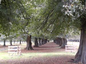 Ancient Lime Tree Avenues
